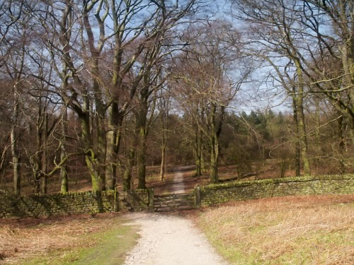 Stand Wood, Beeley Edge
