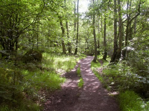 Footpath through Hay Horse Coppice
