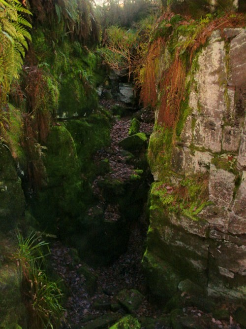 Lud's Church a dank and mysterious place, ferns and lichens hang from the sheer 60ft high walls
