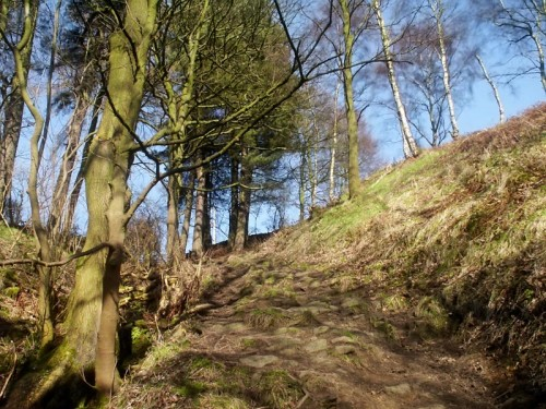 Manners Wood