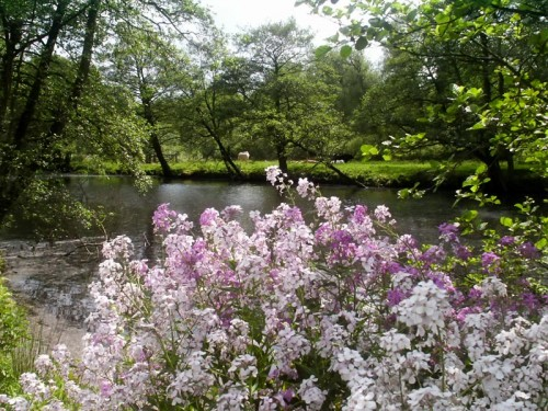 Flowers on the banks of the River Derwent at Froggatt