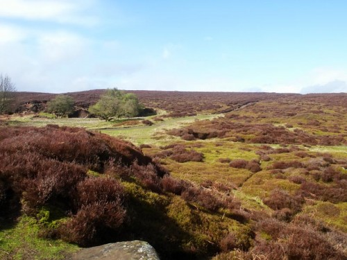 Stanton Moor is situated on elevated ground. The moor is a tranquil place offering fine views with many archaeological remains dotted across the landscape for the visitor to discover.