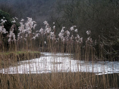 Grasses in Monsal Dale