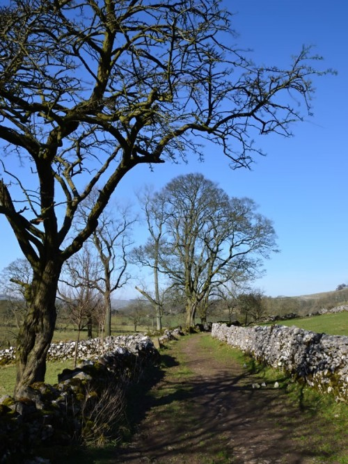 Walled track between Narrowdale and Beresford Dale